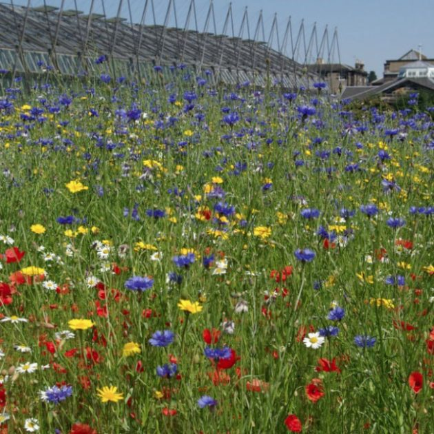 Best British Gardens From Rural Locations to Inner city Botanical Paradises