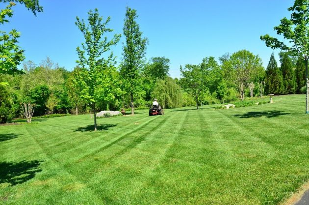 4 Tips to Maintain A Stress Free Lawn In The Summer