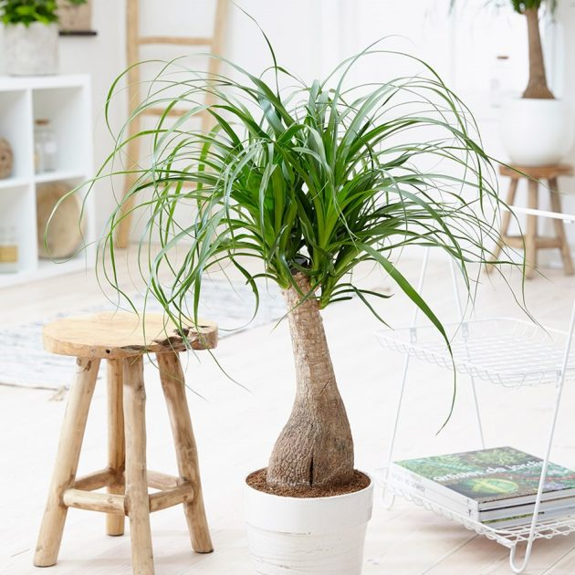 8 Indoor Plants That Are Safe For Your Pets to Spruce Up Your Space