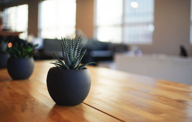 What You Need To Know About Plants In The Office
