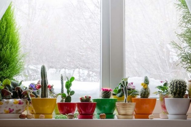 Take Care Of Yourself And Your Home With Plants In Winter