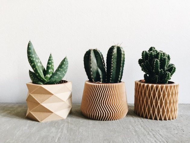 How to Highlight Your Indoor Plants
