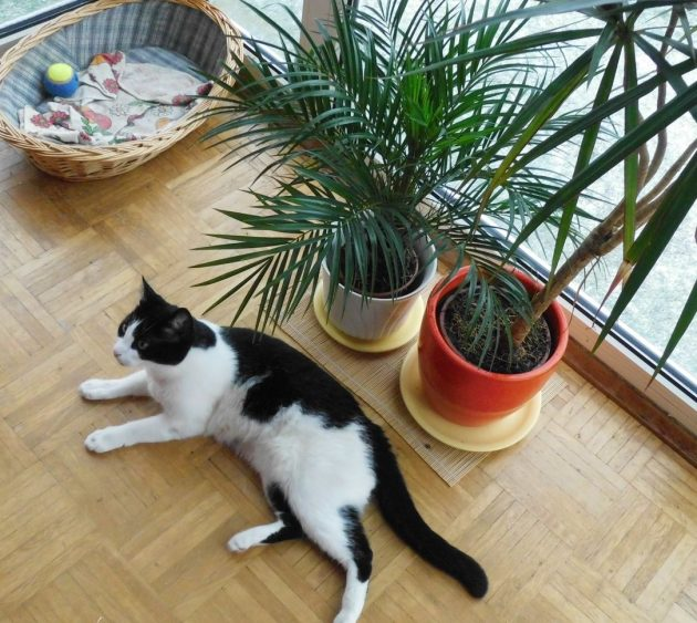 8 Nonpolluting Plants for Your Interior