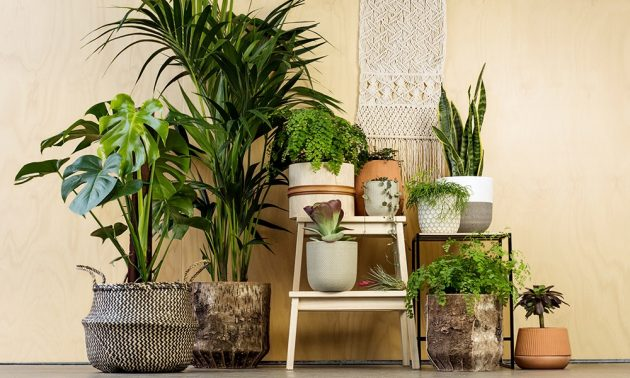 10 Tropical Trees and Plants Guaranteed to Spark Your Home to Life