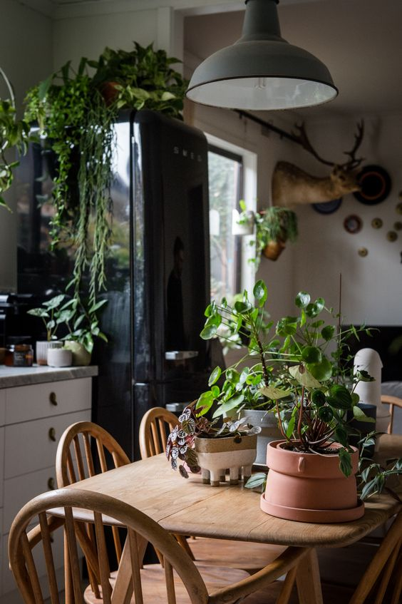 Want to Try Urban Jungle Atmosphere in the Kitchen?