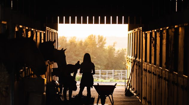 What Makes A Good Equestrian Property?