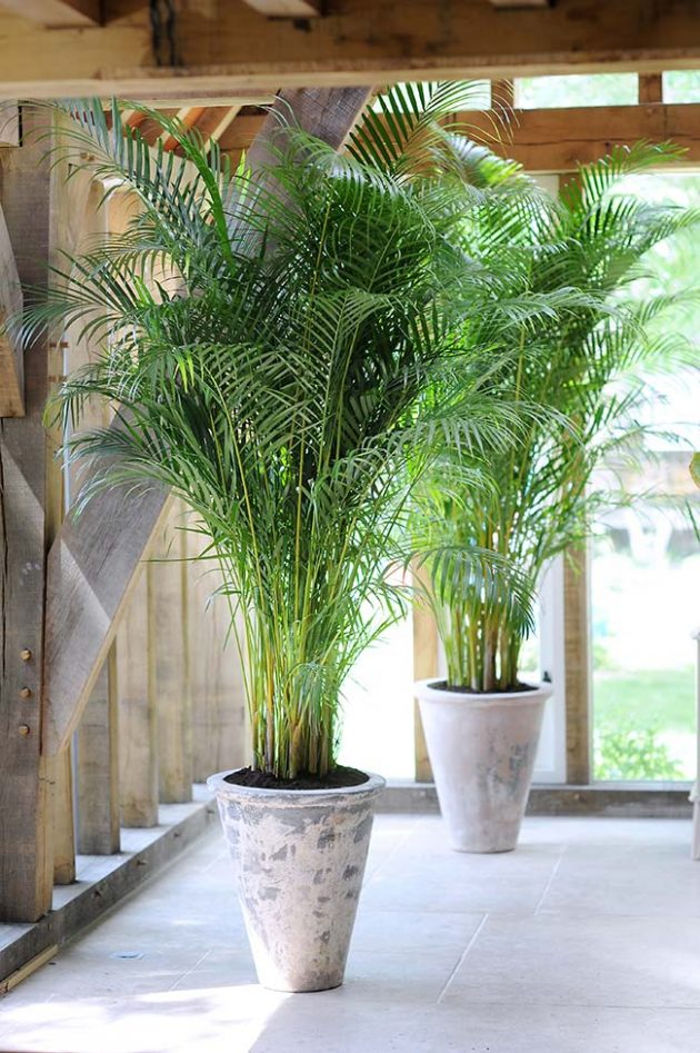 Discover the 10 Most Used Types of Palm Trees in Gardens