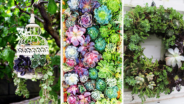 15 Enchanting DIY Succulent Garden Ideas You Will Adore