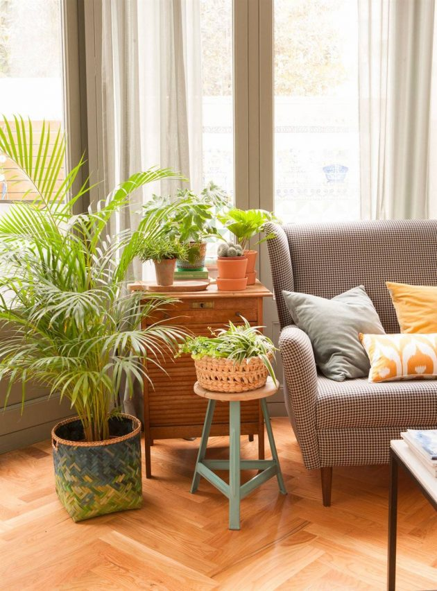List of Ideal Plants for Small Flats