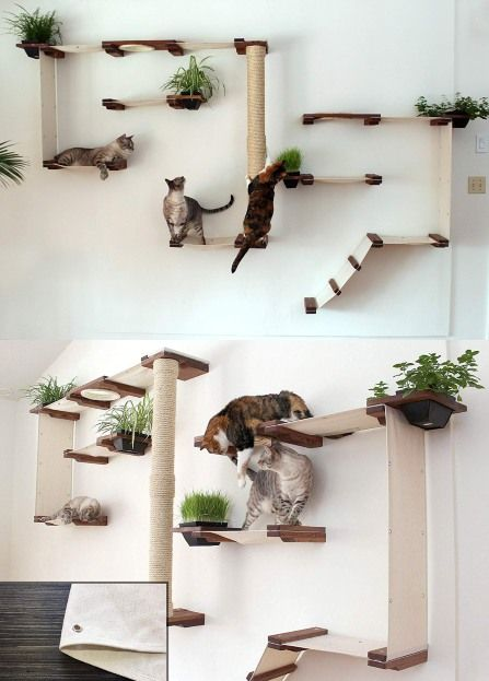 How to Organize Your Cat-Friendly Home