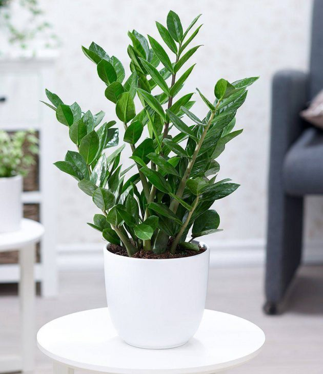 6 Hardy and Easy-to-Maintain Indoor Plants