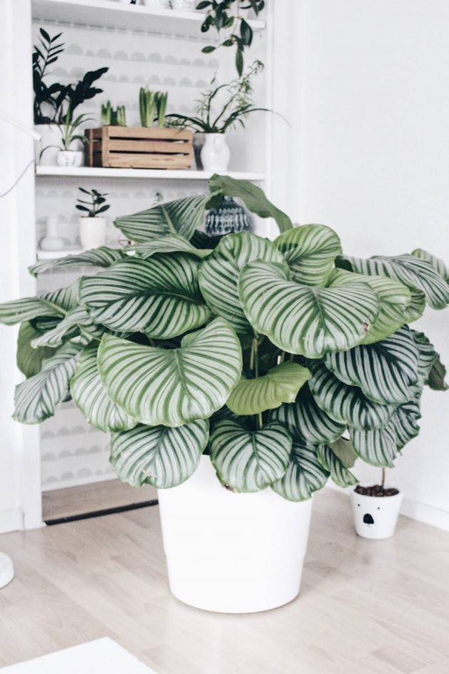5 Pet Friendly Plants & 5 That are Toxic