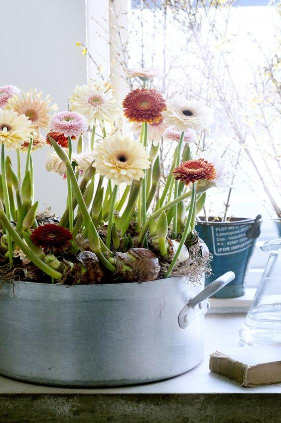 10 Sun & Heat Resistant Outdoor Plants Perfect for Terraces