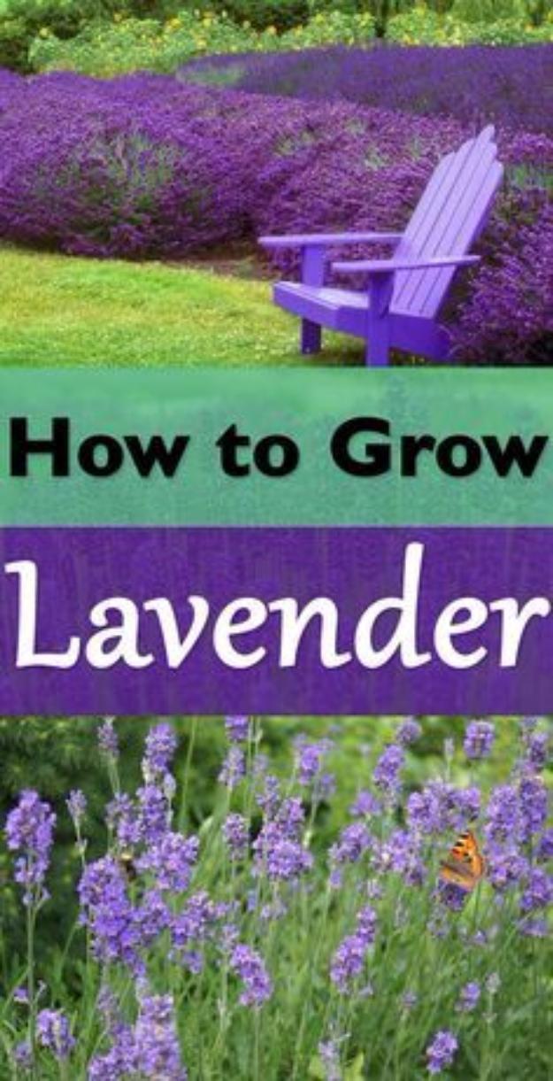 15 Charming DIY Fall Decor Ideas For Your Garden
