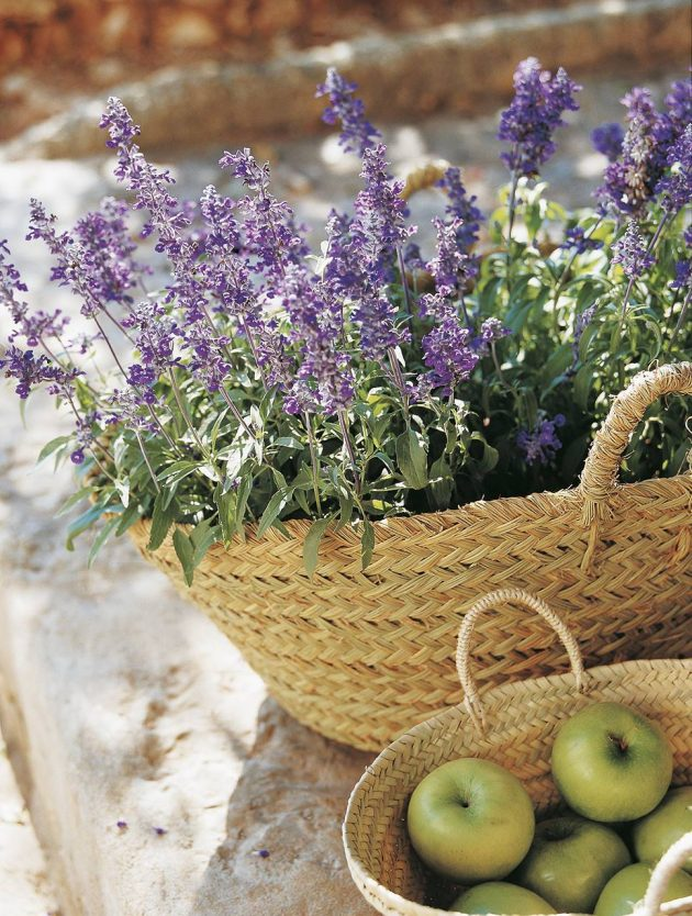 Medicinal Plants That Cannot Be Missing in Your Home Garden
