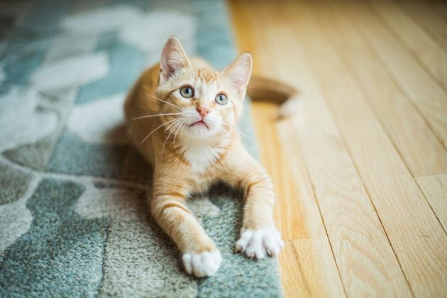 How to Find a Pet-Friendly Rug That Will Look Chic