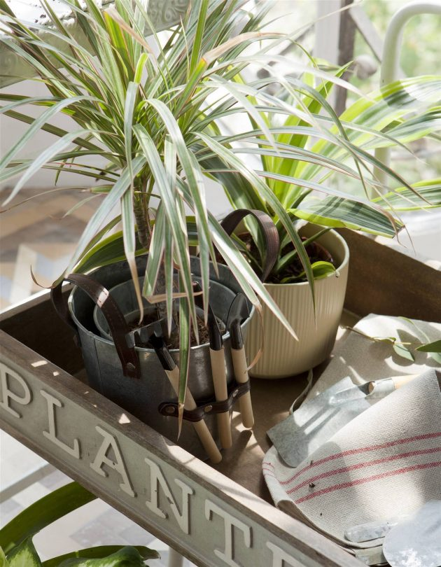 Autumn Plants & Flowers to Fill Your Home With Warmth