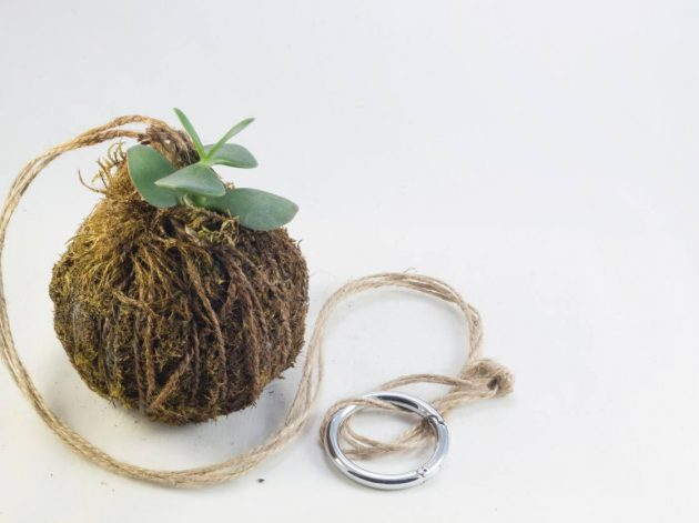 Kokedama - Japanese Technique to Decorate Your Home With Plants