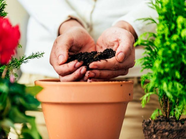 How to Prevent Plant Leaves From Turning Yellow