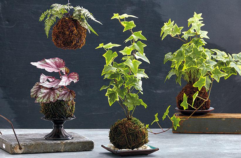 Кокедама — японская техника украшения дома растениями