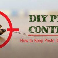 8 DIY Tips to Control Pests in Arizona