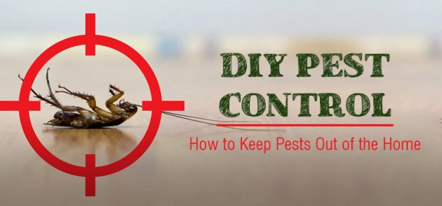 8 DIY Tips to Control Pests in Arizona