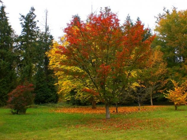 Beautiful Trees For Planting In Front Of Your House