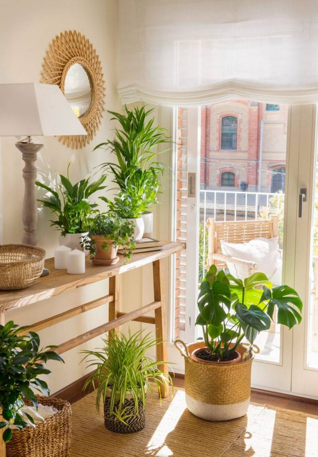 The Perfect Plants For Every Room In Your Home