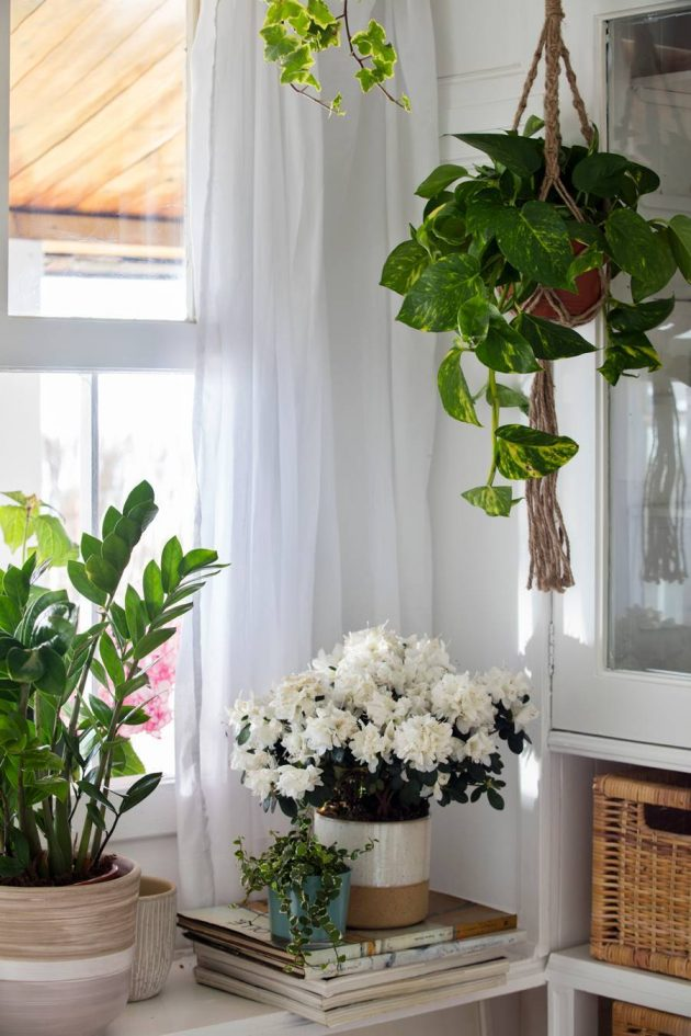 The Best Decorative Ideas For Your Hanging Plants In The Home & Outdoors