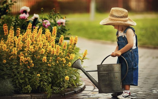 Why Garden Plants Benefit You?