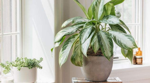 How To Decide How Much Sunlight Your Houseplants Need