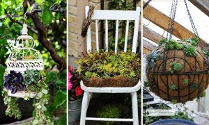 15 Super Cool DIY Succulent Ideas For Your Garden