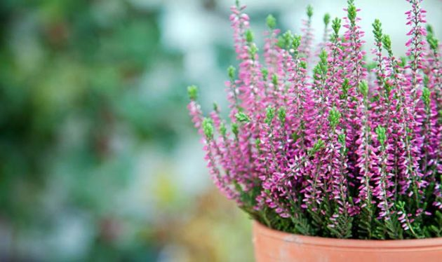 Autumn Plants To Make The Garden From Home Even More Beautiful