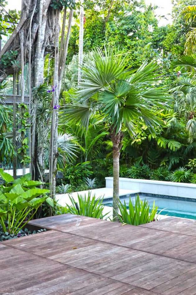 How To Take Care Of Fan Palm Tree